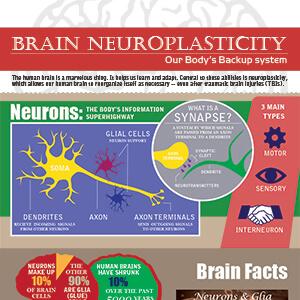 neuroplasticity_300